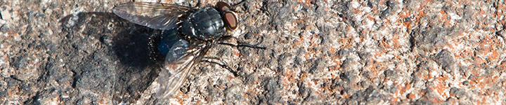 Entomology – A Primer